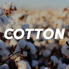 6 benefícios que você não conhecia sobre o cotton!